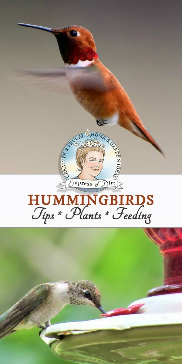 Hummingbirds in the Garden