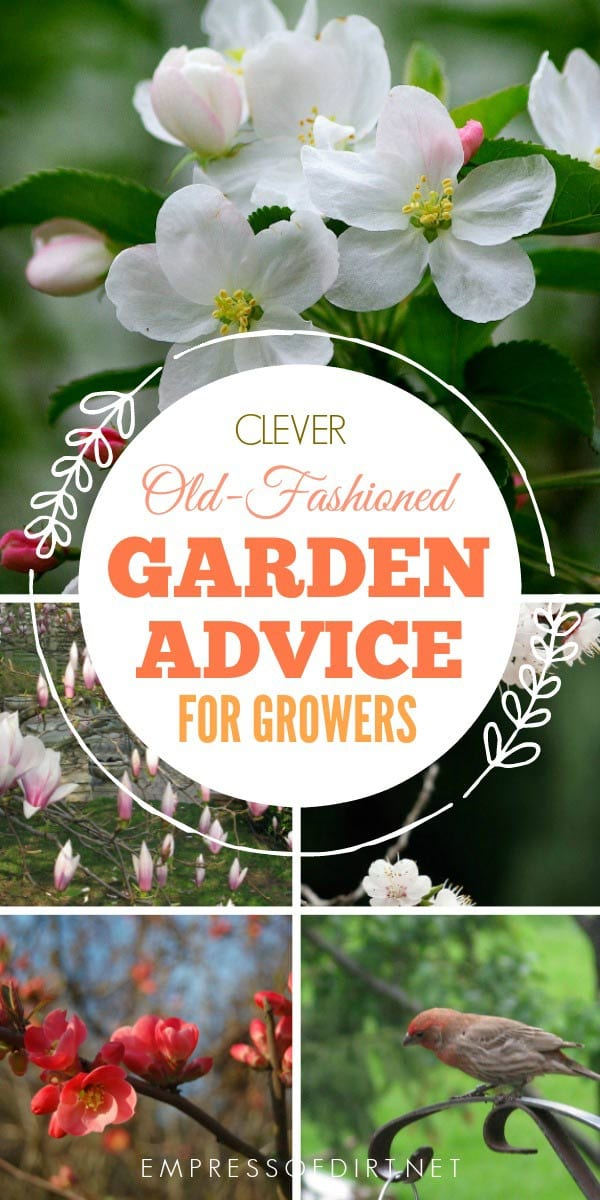 Old-fashioned garden advice and wisdom to use in the home garden.