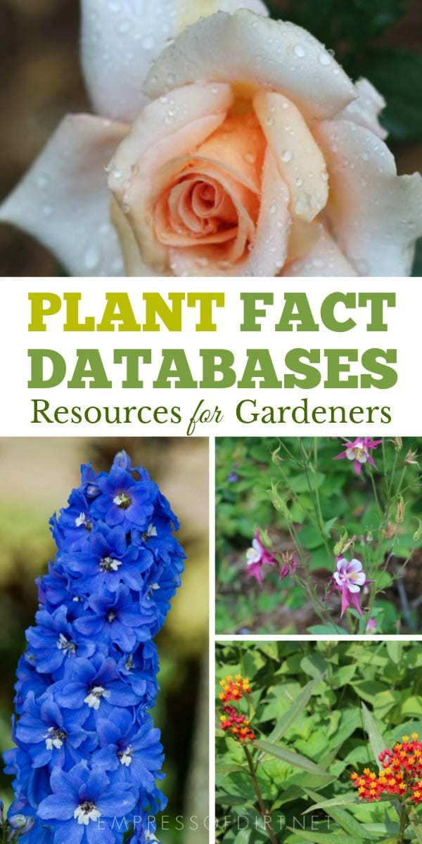 This lists some favorite online plant databases, primarily in the United States and Canada, for information on plant names, growing zones, research, and identifying images.