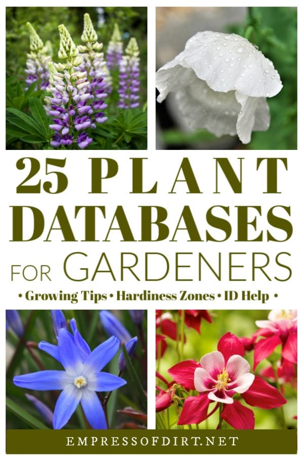 Online Plant Databases (Canada & United States)