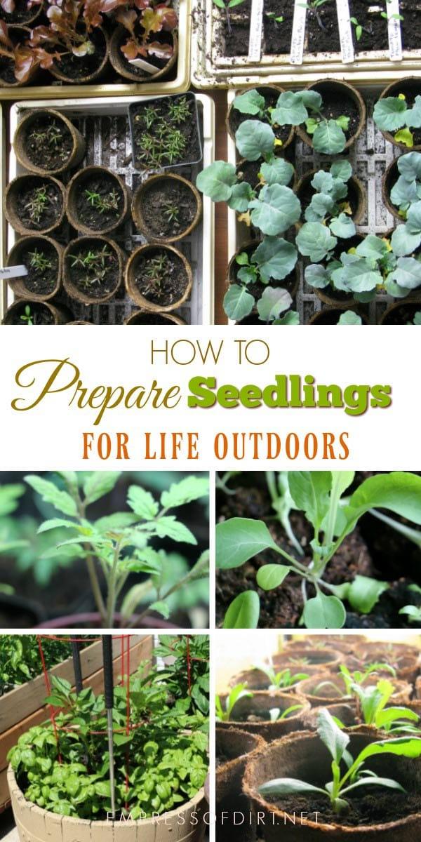 How to Prepare Indoor Seedlings for Transplanting Outdoors