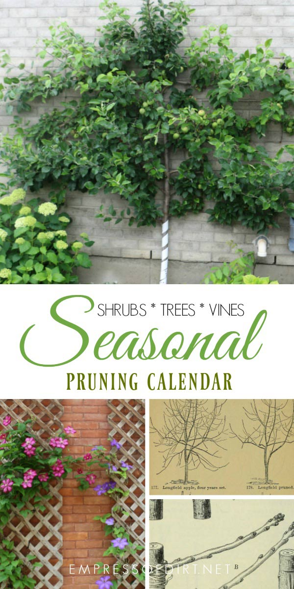 Seasonal Pruning And Deadheading Garden Calendar Empress Of Dirt