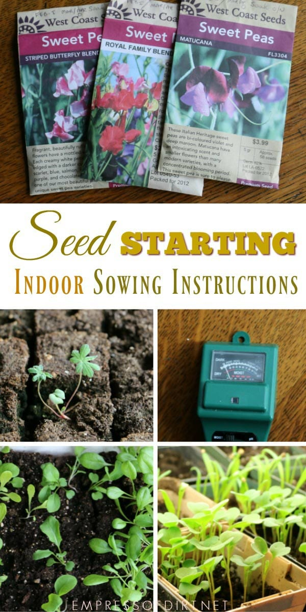 Step-by-step instructoins for sowing seeds indoors.