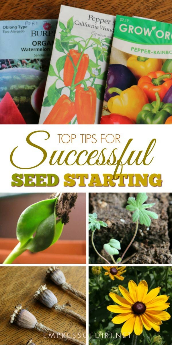 Tips for successful indoor seed sowing.