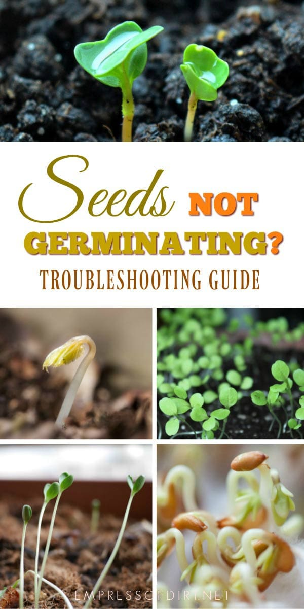 Seeds not germinating or growing well? This troubleshooting guide will help.