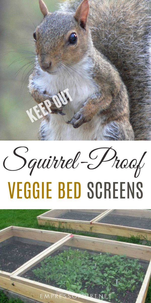 Squirrel screens are one way to keep squirrels and other wild animals from digging in raised garden beds.