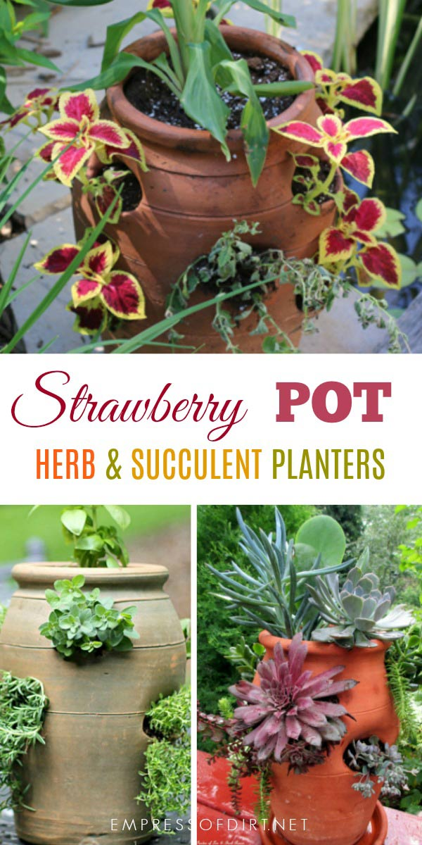 Strawberry pots can be used for a variety of plants including various herbs, perennials, and annuals.