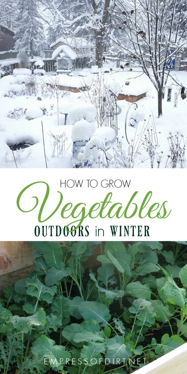 You can grow many cool-loving vegetables in protected raised beds outdoors in winter in a cold climate.