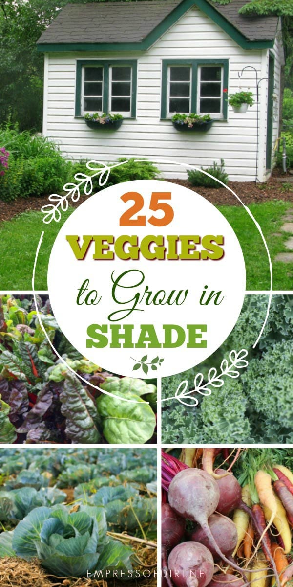 Most vegetables actually do best with dappled or part shade to protect them from the hot, dry sun.