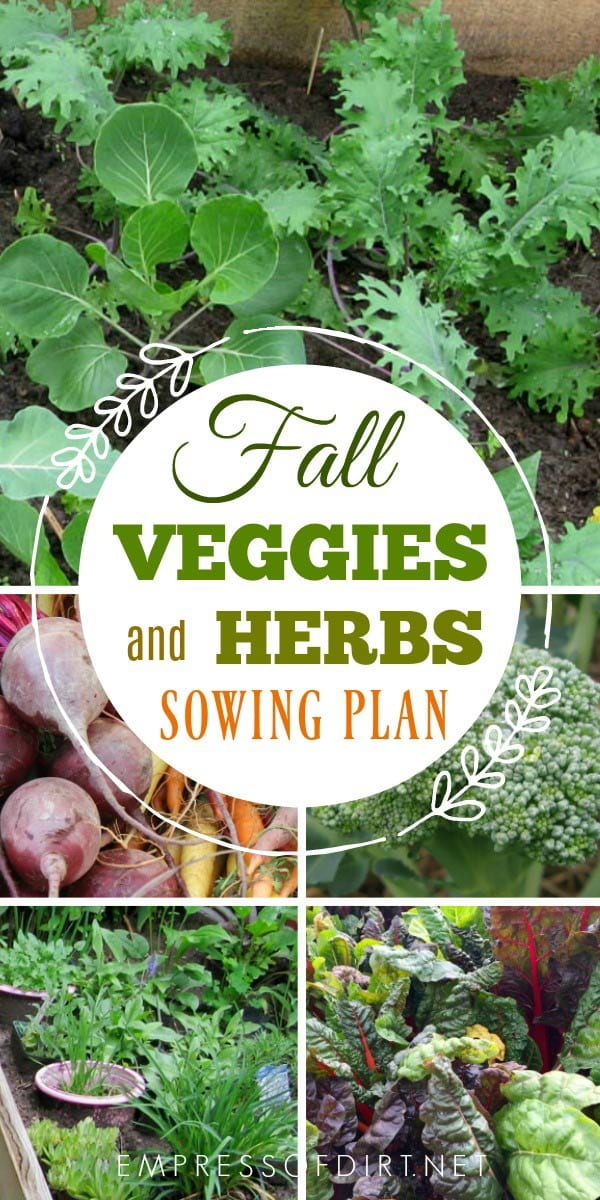 This handy list shares which vegetables and herbs you can grow in fall in a cold climate like I have here in Ontario, Canada, as well as the best times to start the seeds so your harvest beats the frost.