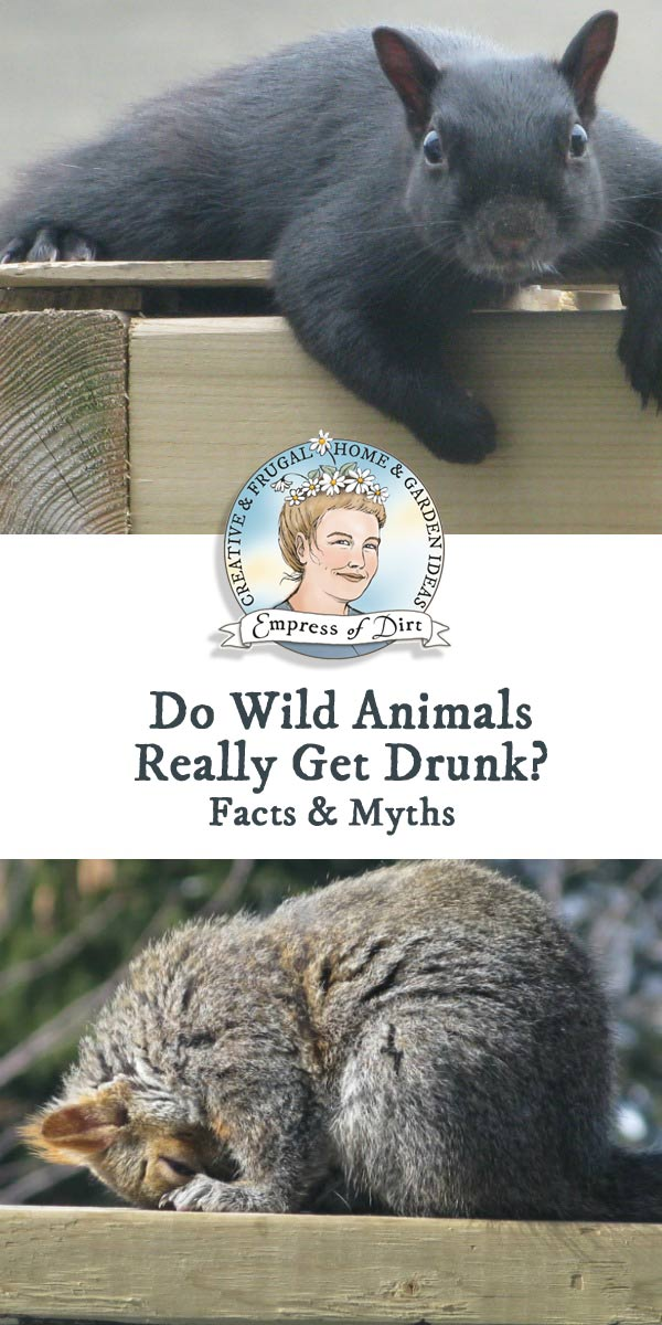 Do Birds and Other Wild Animals Really Get Drunk?