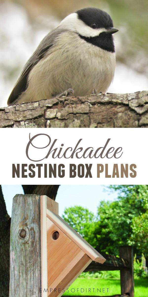 How to make a nesting box for chickadees.