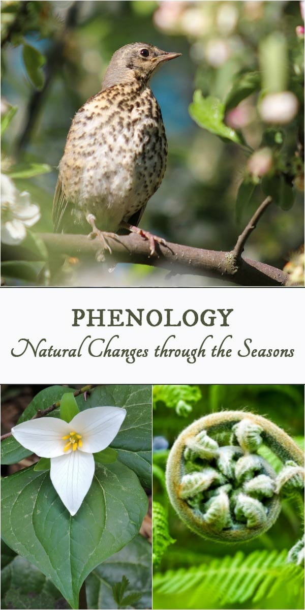Using Natural Signs & Signals to Grow Your Best Garden