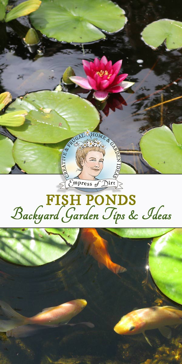 Fish pond ideas and tips for backyard gardens, including in-ground, and above-ground in rasied beds.