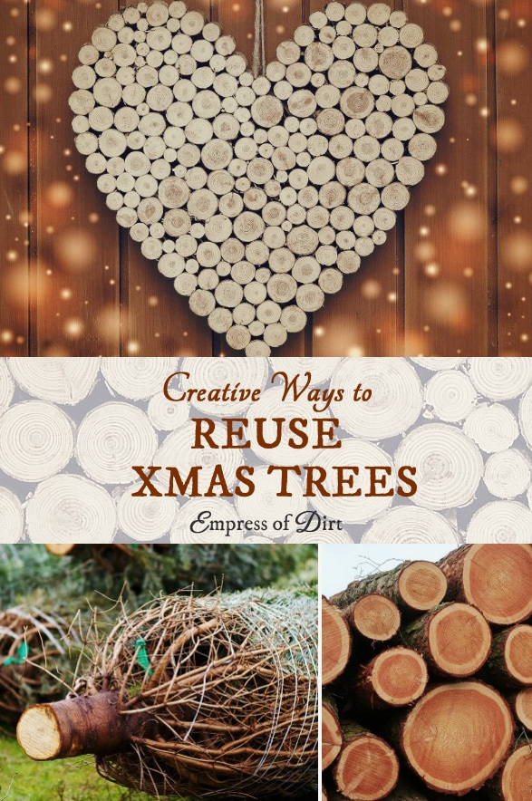 There's a lot of creative craft and decor ideas hiding in that old Christmas tree! Here's a whole bunch of home and garden projects to make with the wood from a live tree after the holidays are over.