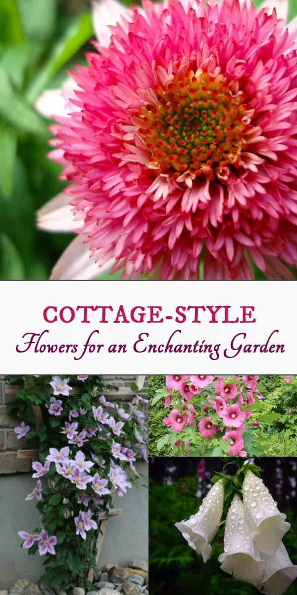 Choosing the best flowering perennials for a cottage-style garden.