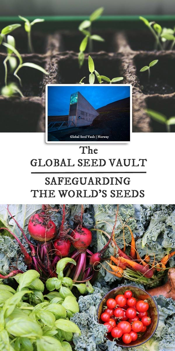The Global Seed Vault | Safeguarding Food Seeds for the Future