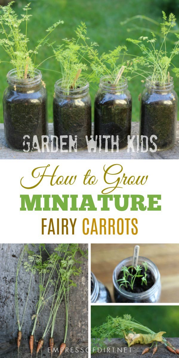 How to grow miniature fairy carrots in jars. A fun garden project for kids.