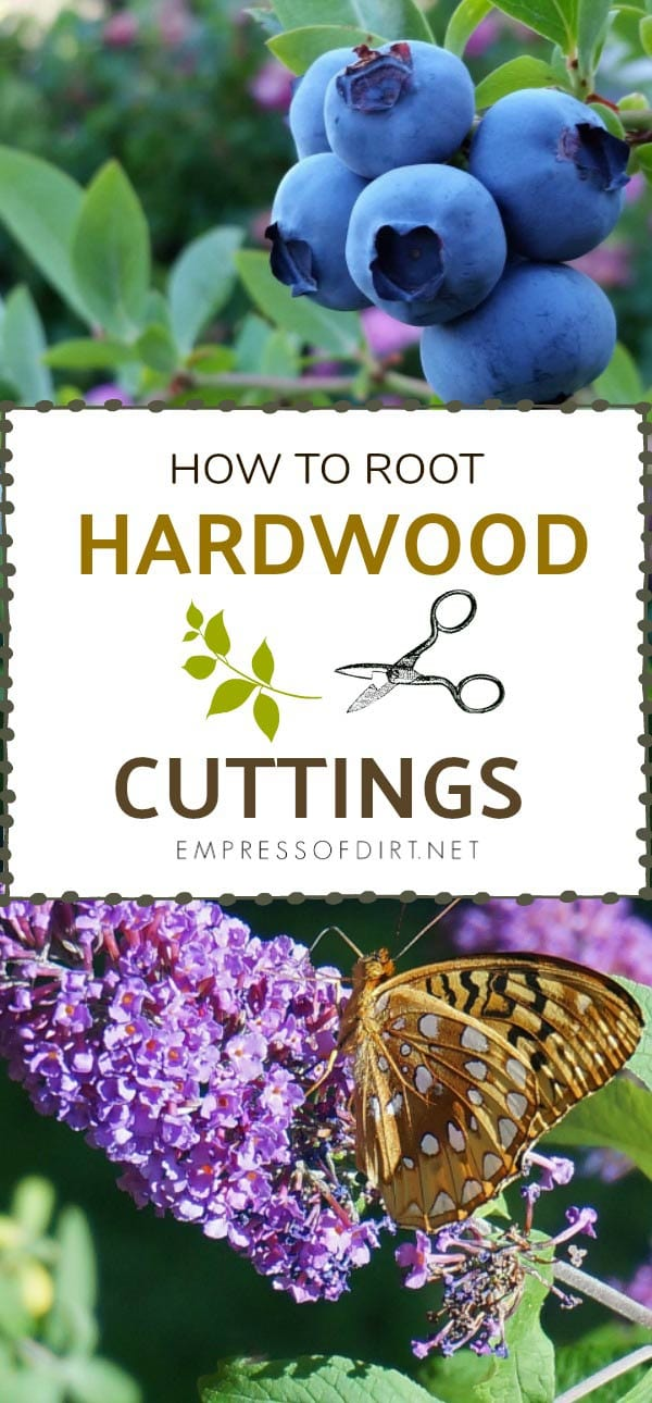 How to Root Hardwood Cuttings