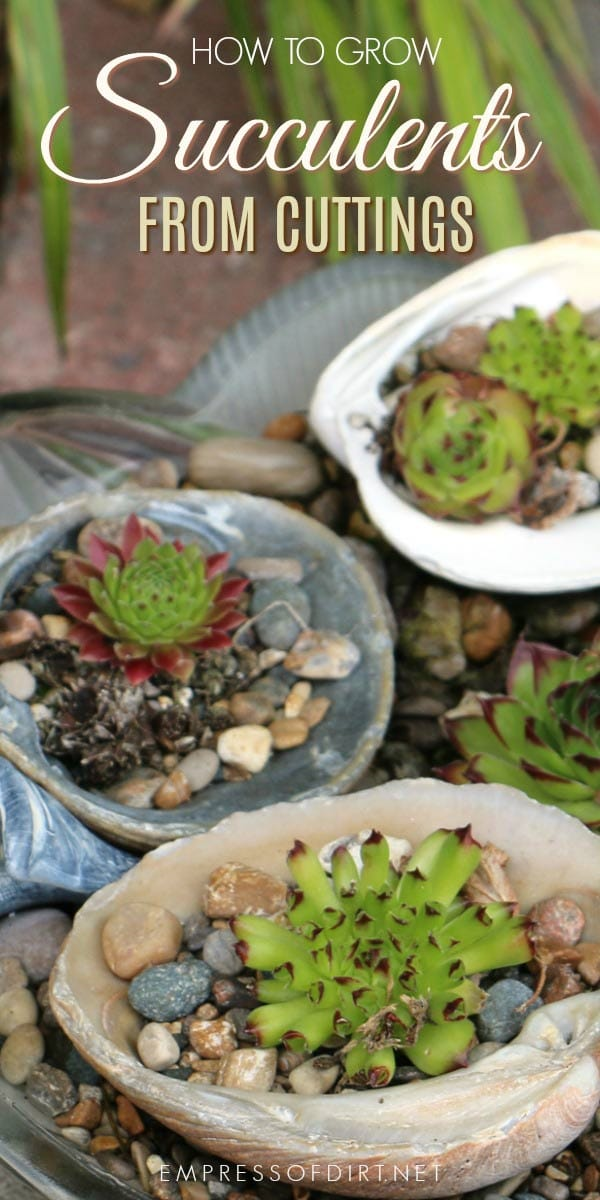 Grow new succulents from cuttings.