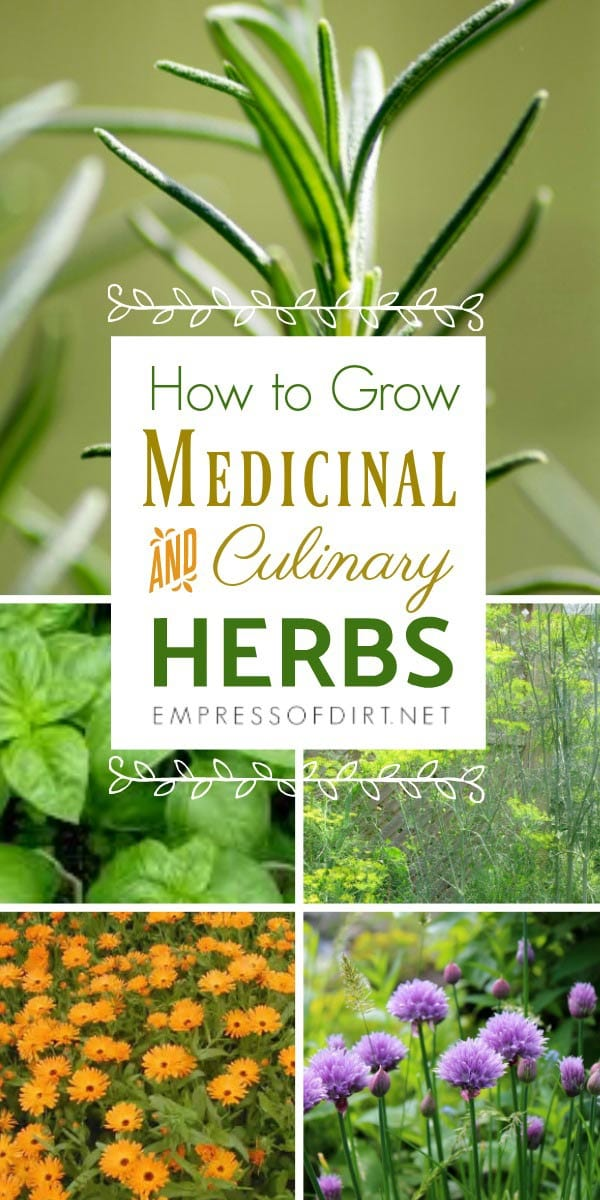 How to grow medicinal and culinary herbs in your garden. Tips for annual and perennial herbs.