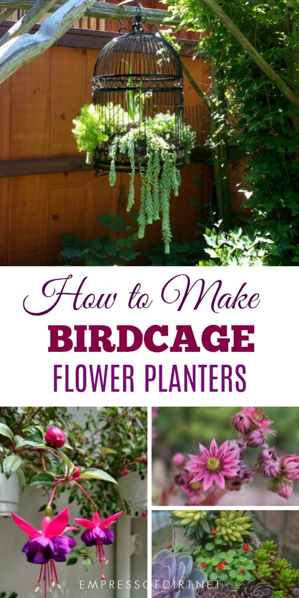 Birdcage Planters Are A Favorite With Creative Gardeners These Tips Share Ideas For Setting Up