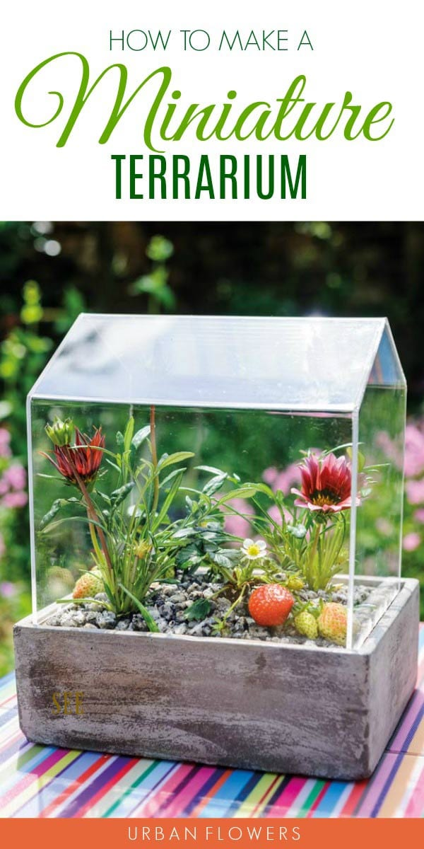 Step-by-step instructions for creating your own miniature terrarium with living plants.
