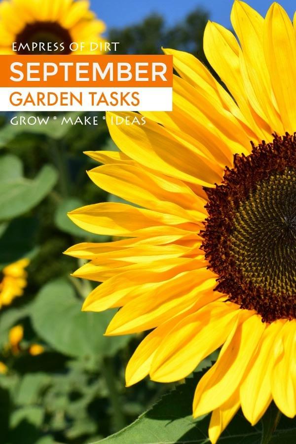 September garden tasks with Empress of Dirt