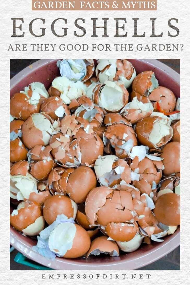 Crushed brown eggshells.