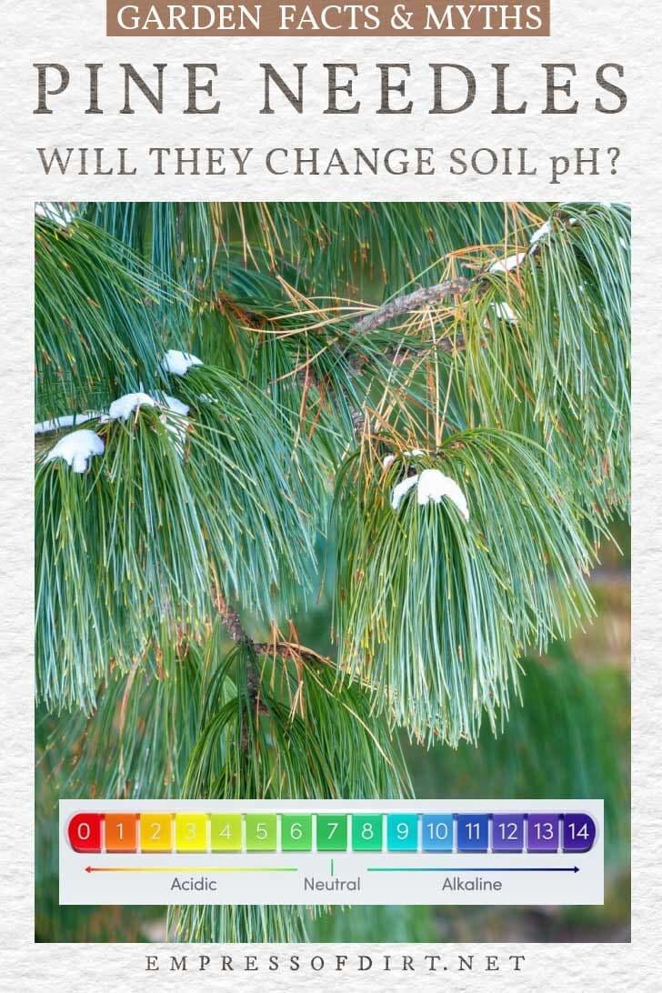 Pine needles and pH measurement chart.