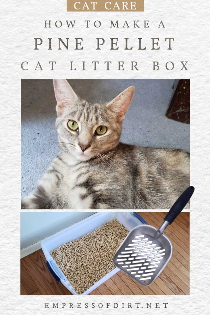 Cat litter box with pine pellets.