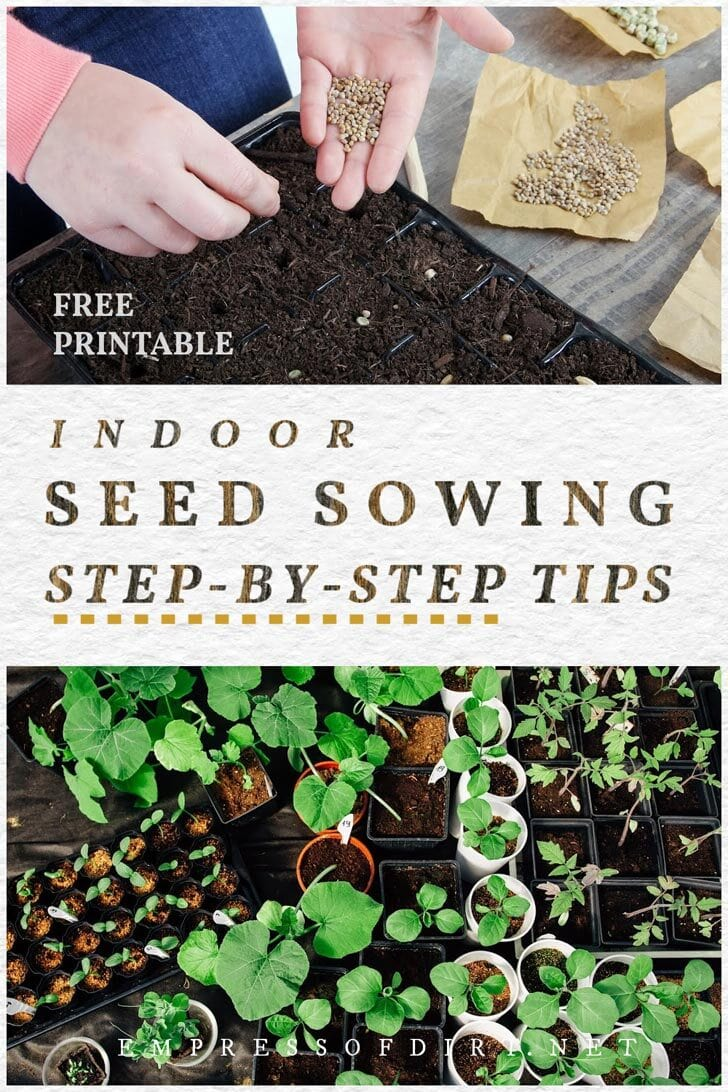 Sowing seeds indoors.