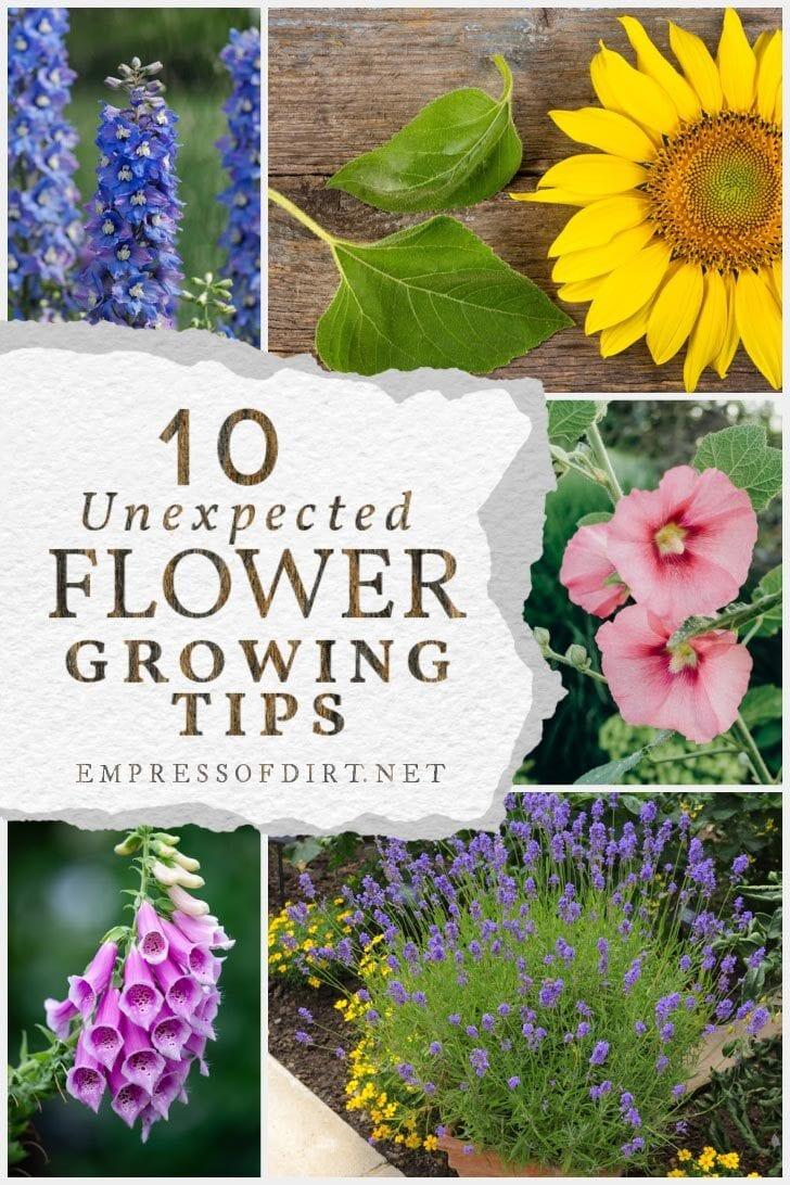 Flowers including sunflower, delphinium, hollyhock, foxglove, and lavender.