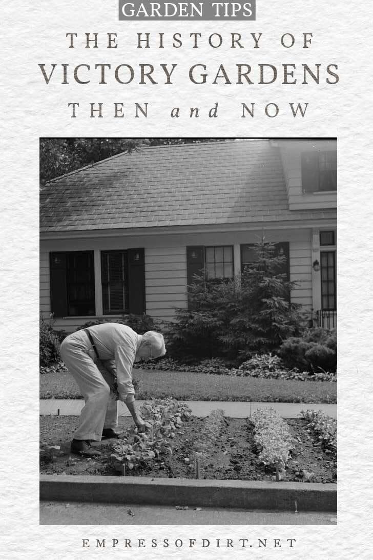 Man tending a front yard victory garden.