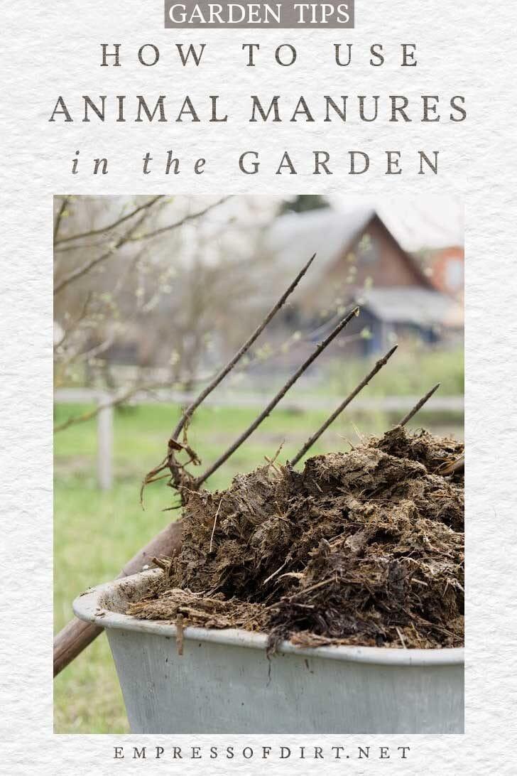 Garden fork and wheelbarrow of animal manure.