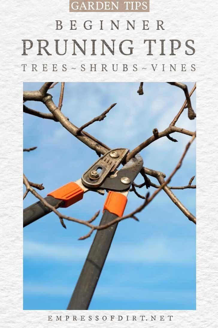 Garden lopper tool pruning a tree branch.