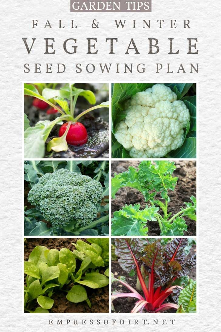 Vegetables to grow in fall and winter including radish, cauliflower, broccoli, kale, lettuce, and chard.