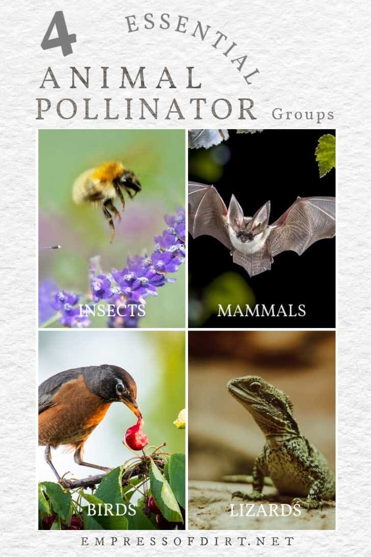 Animal pollinators that give life on earth including bees, bats, birds, and lizards.