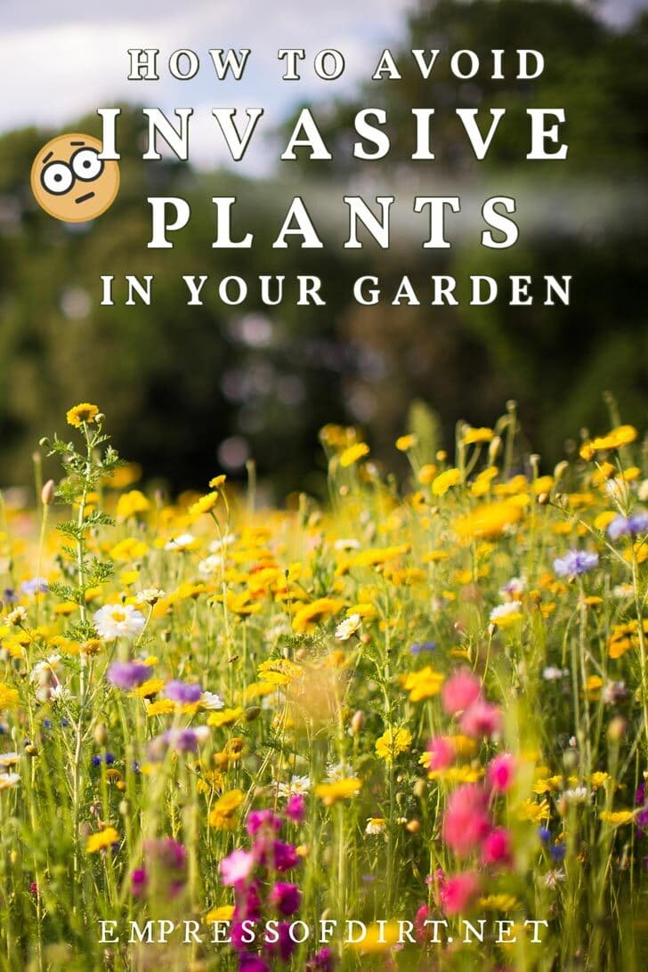 A garden with wildflowers and other potentially invasive plants.