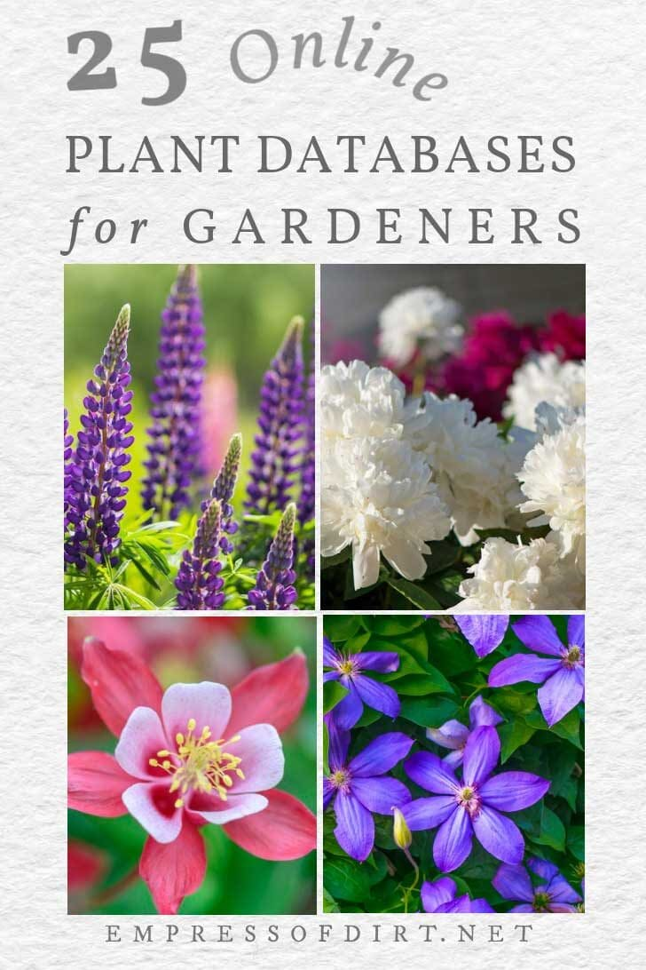 Garden plants including lupines, columbine, peony, clematis.