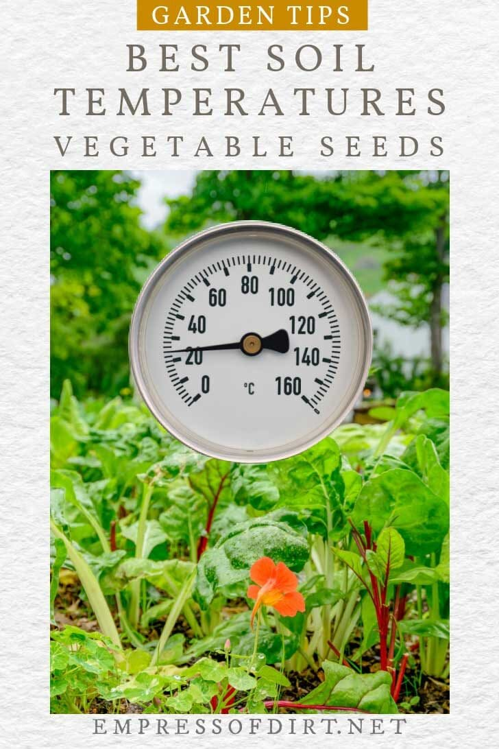 Temperature gauge and a vegetable garden.