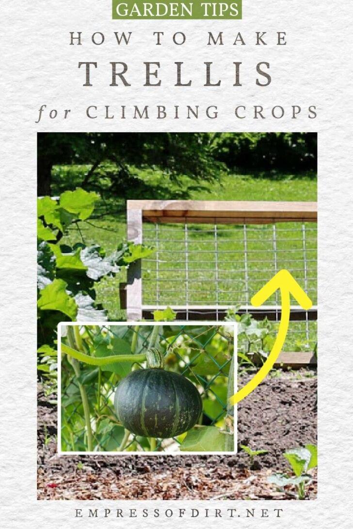 Trellis for climbing vegetables in the garden.