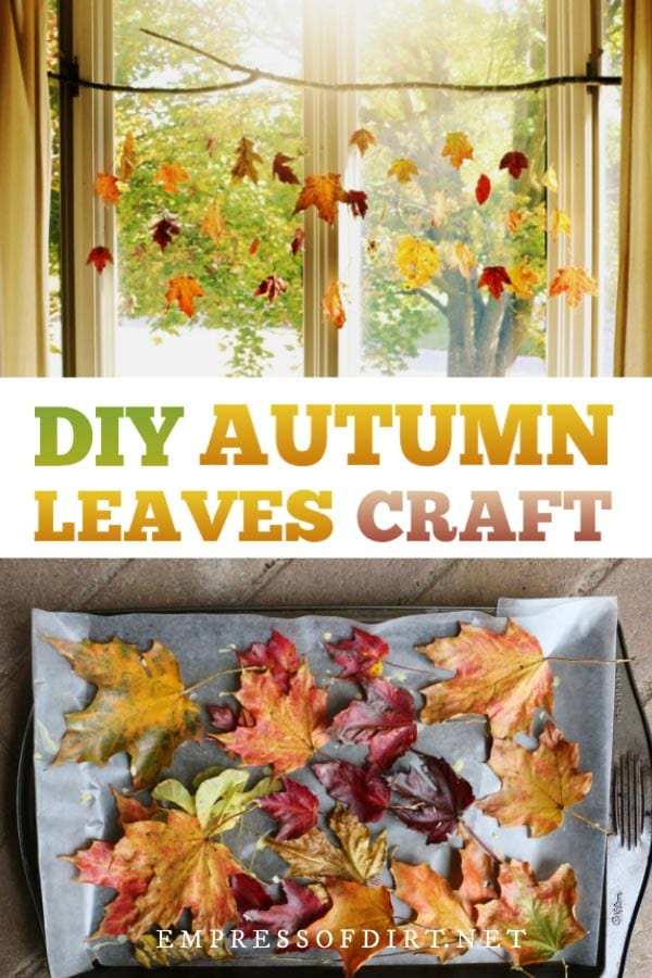 Preserve the beauty of fall leaves with this natural autumn leaf craft. Make it an afternoon.