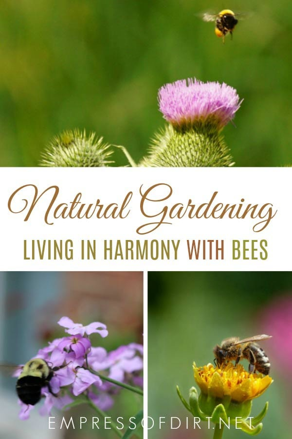 Living in harmony with bees in a home garden. Tips for welcoming bees with the right plants and organic growing methods.