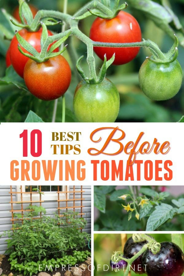 10 Best Tips To Know Before You Plant Tomatoes
