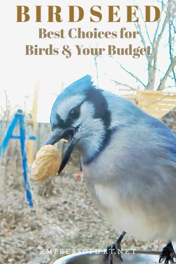 Choosing birdseed for bird health and your budget.