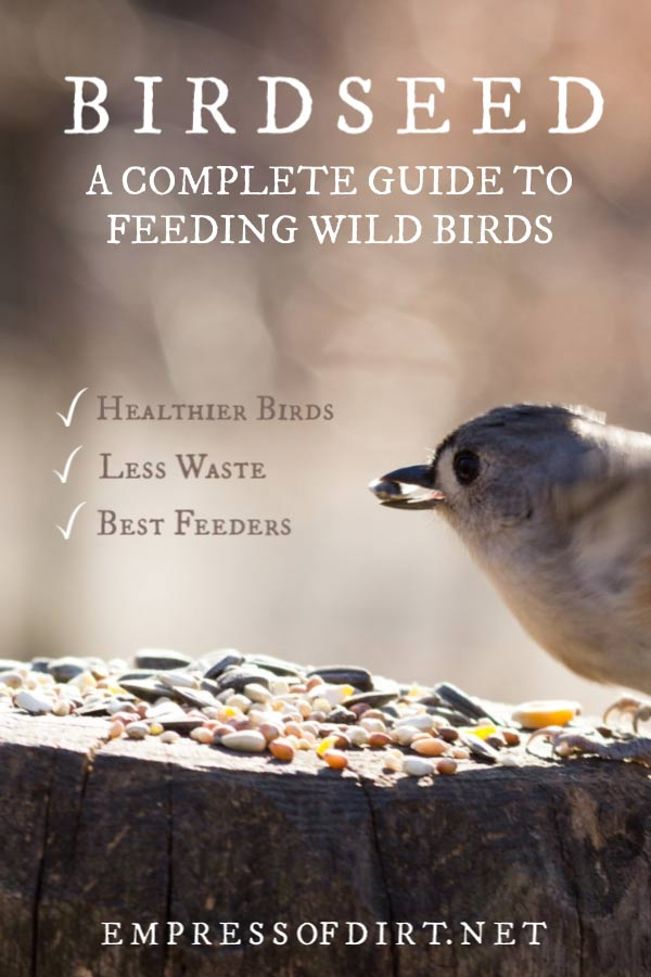 How to Choose the Right Birdseed for Backyard Birds and Avoid Feeder Problems