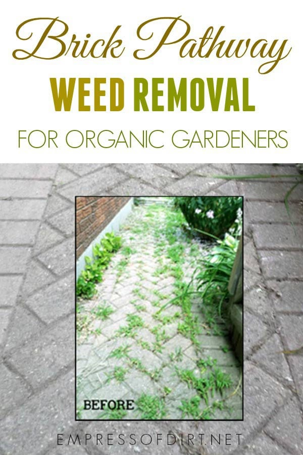 How to remove weeds from a brick path or patio for organic gardeners.