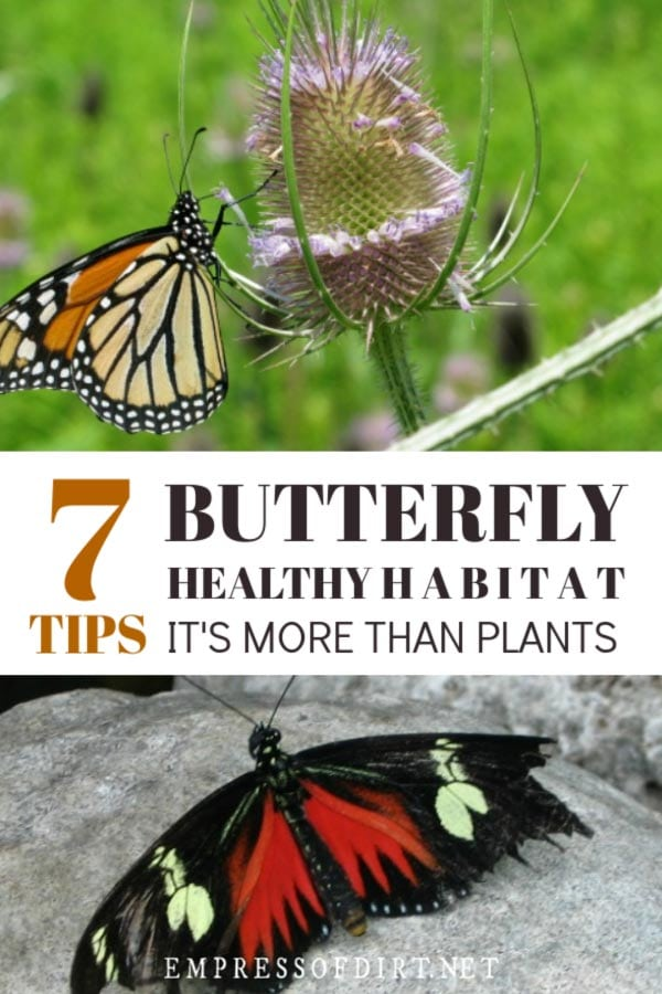 Turn Your Garden into a Butterfly Haven | It's More Than Plants