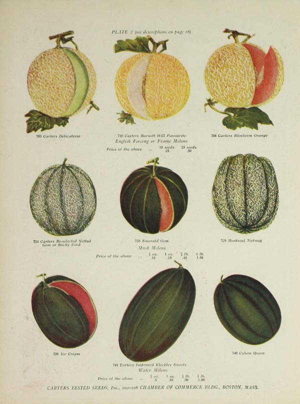 Carter's Tested Seeds | Catalog Illustration